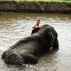Swam with Elephants today 🐘🇹🇭