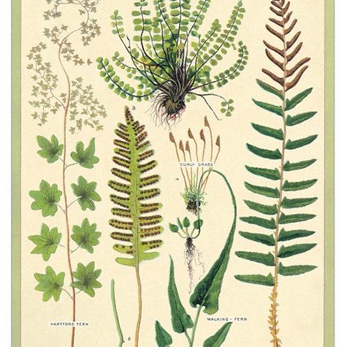 """Ferns poster 20"""" x 28"""""""