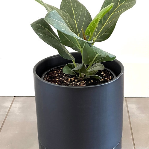Romey Pot -Black