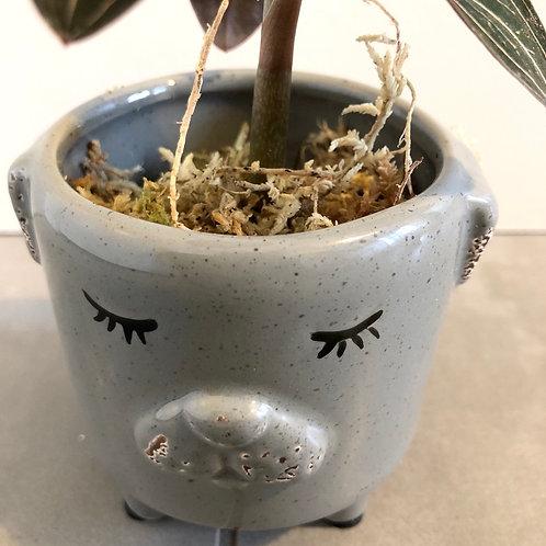 Grey puppy dolomite planter