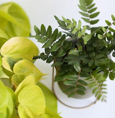 lmm-fall_19_vendor-sunroom_plants-40.JPG