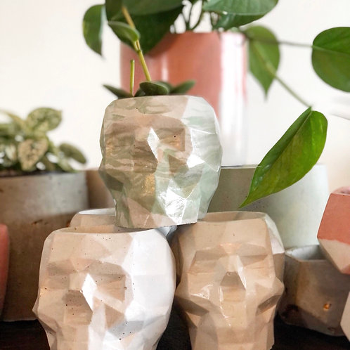 Concrete planter- Pacho's Plants