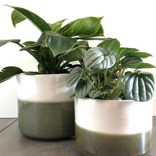 Green & white stoneware planter