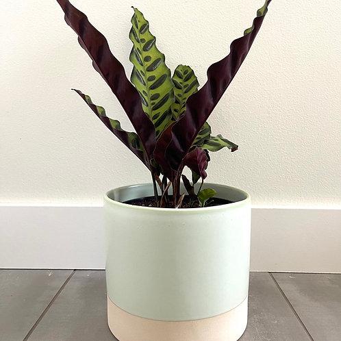 Glazed ceramic w/natural base