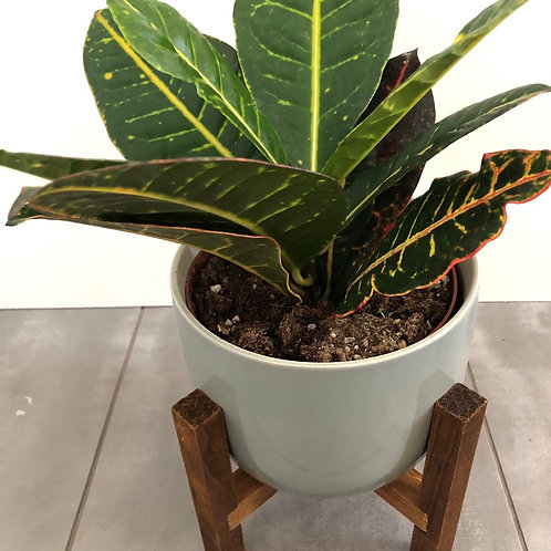 Assorted tropical in ceramic w/ stand