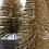 Thumbnail: Glitter bottle brush tree with cement base