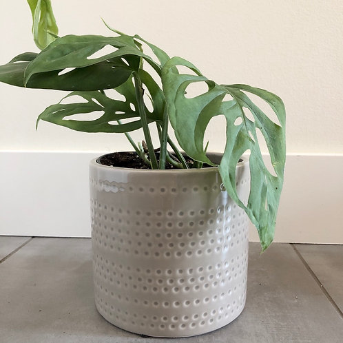 Dotted grey dolomite planter