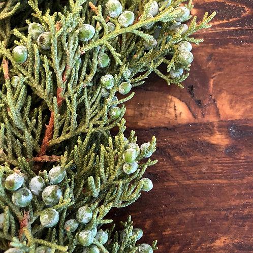 Juniper with berries stem