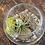 Thumbnail: DIY air plant kit