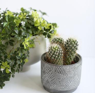 lmm-fall_19_vendor-sunroom_plants-35.JPG