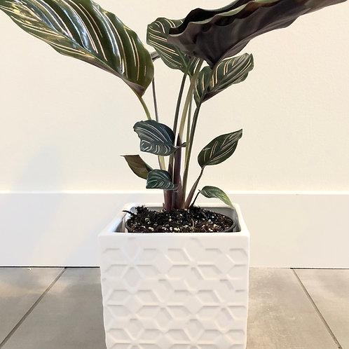 Geometric dolomite planter