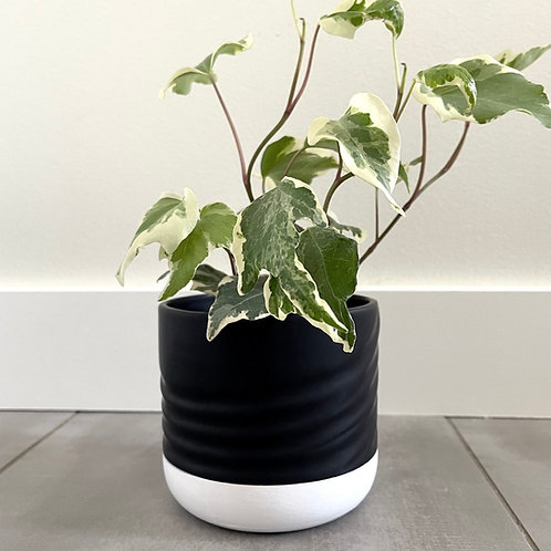 Black dolomite planter with white base