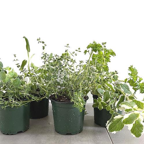 Assorted Herb Bundle (4)