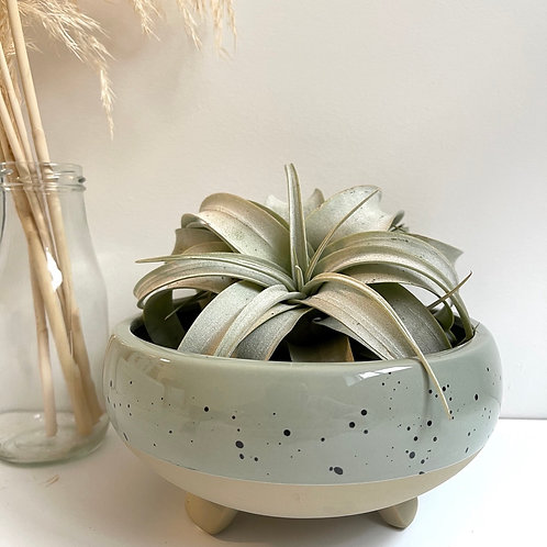 Shallow speckled sage footed planter