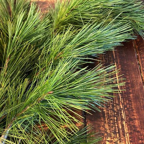 White pine bunch
