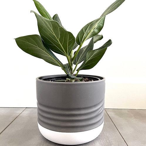 Grey dolomite planter with white base