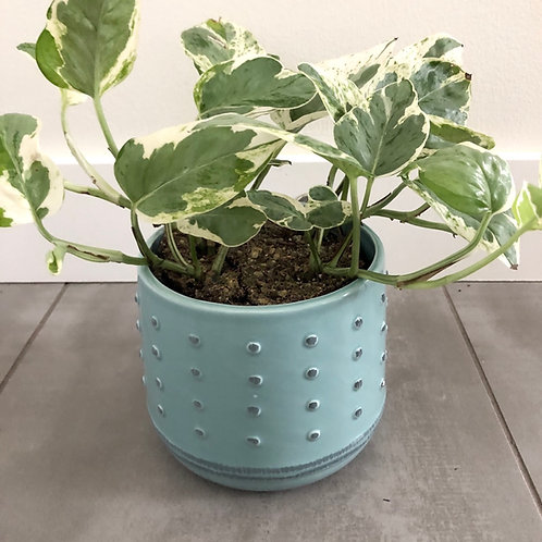 Dotted dolomite planter