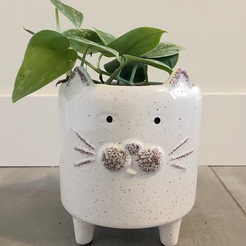 Footed white cat dolomite planter