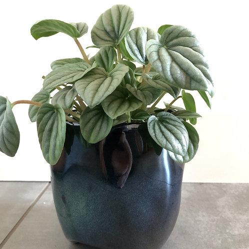 Reactive glaze stoneware planter w/black rim