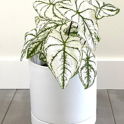 Romey Pot-white