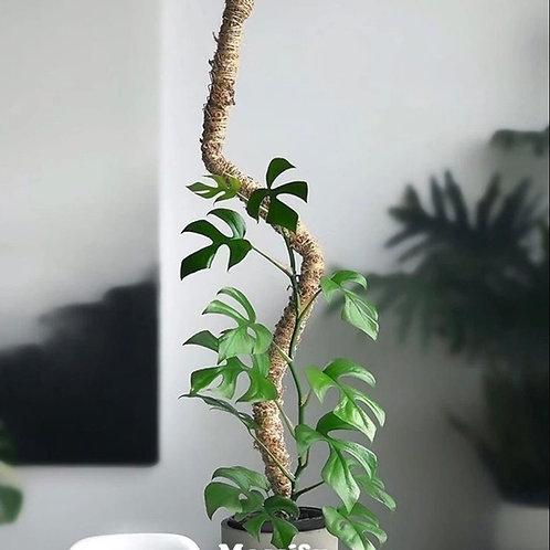 Bendable Moss pole