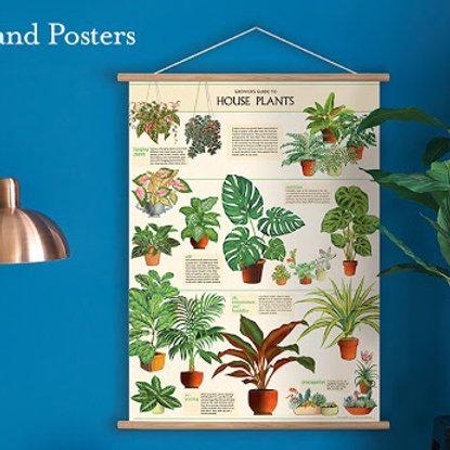 "Houseplant Poster 20"" X 28"""