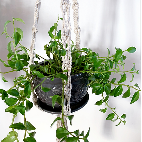 Willow macrame plant hanger- Wild & Free Studio