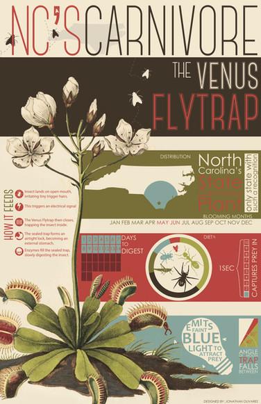 Infographic Venus Fly Trap.jpg