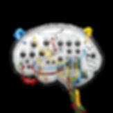 Neuroplasti Kopie.png