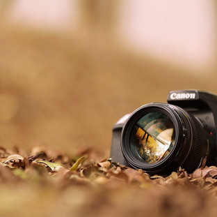 other-camera-canon-leaves-hd.jpg