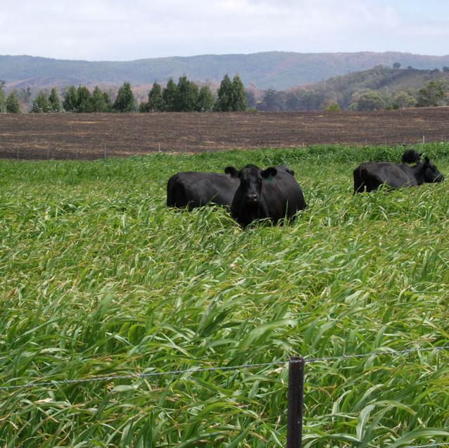 Agronomy.jpg