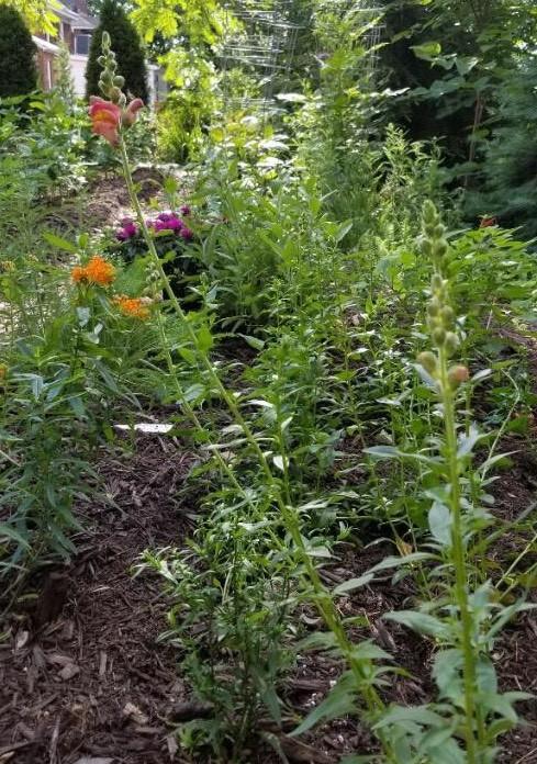 catchfly gardens