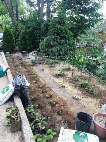 Back Garden in Spring 2018