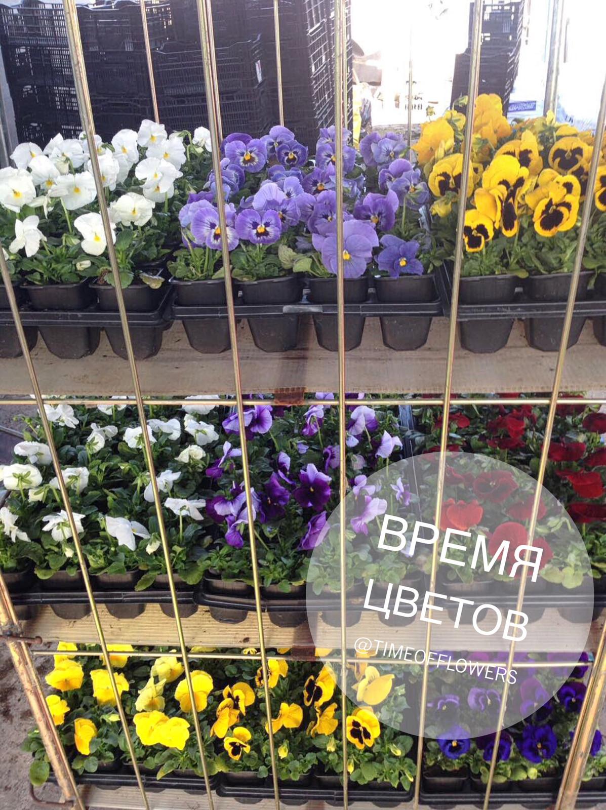 Недорогих букетов, купить цветы в пятигорске оптом