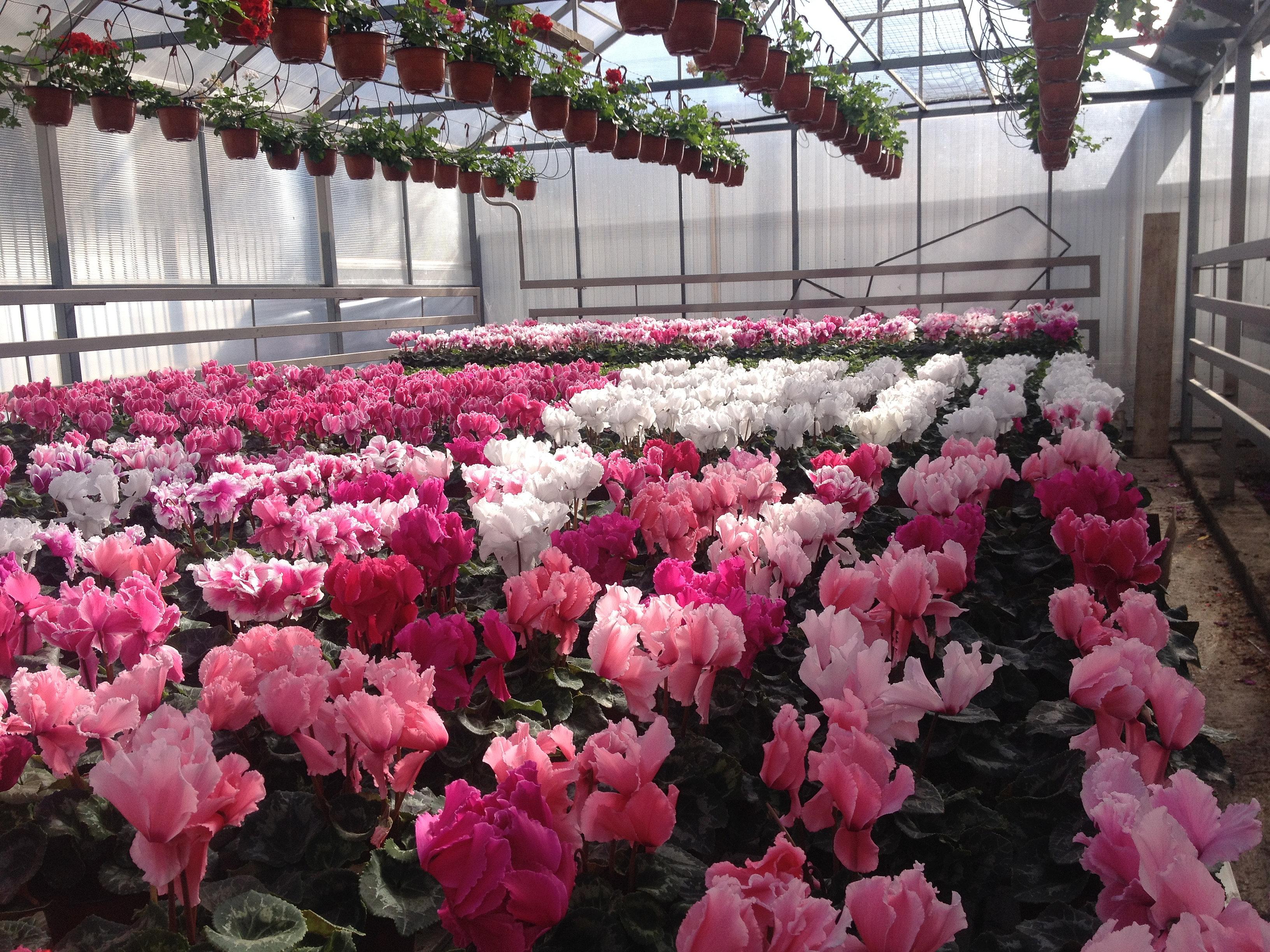 Купить, продажа цветы оптом на кмв