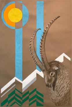 Alpine Ibex 2