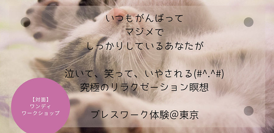 ワンディ.jpg
