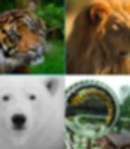 Zoosafari.JPG
