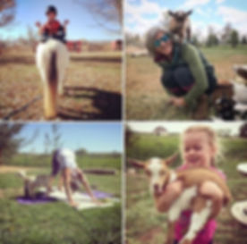 Flower Lion Farm's popular goat yoga cla