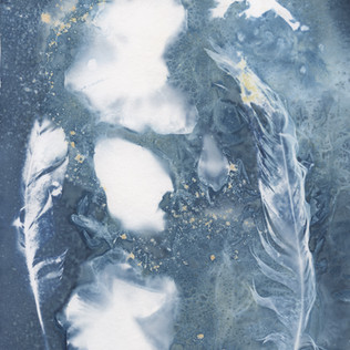 Wet Cyanotype