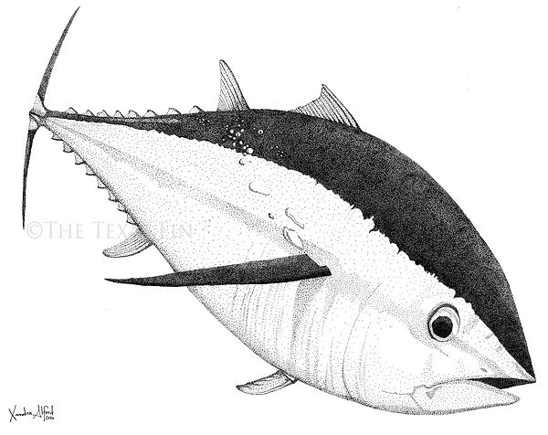 Teeny Dot Tuna with watermark.jpg