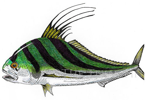 """""""Roosterfish"""" Print"""