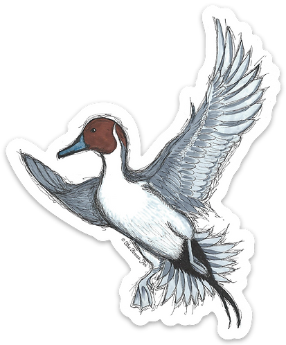 Pintail Takeoff Decal