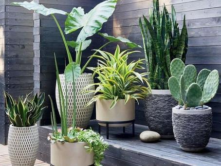 Back to the nature. In questi mesi di lock down chiusi in casa quanto ci sono mancate le piante?