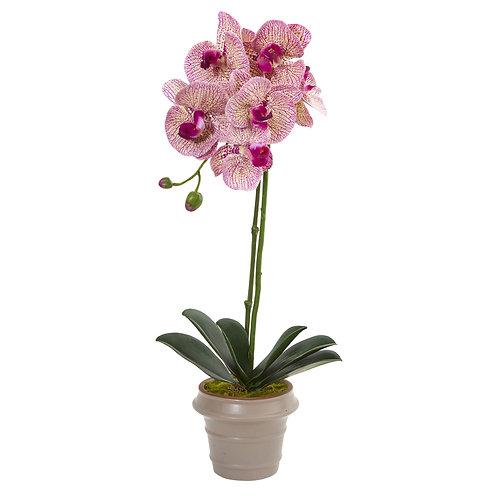 "20"" Designer Phalaenopsis Orchid Artificial Arrangement"