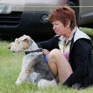 2016-dogshow-8917.jpg