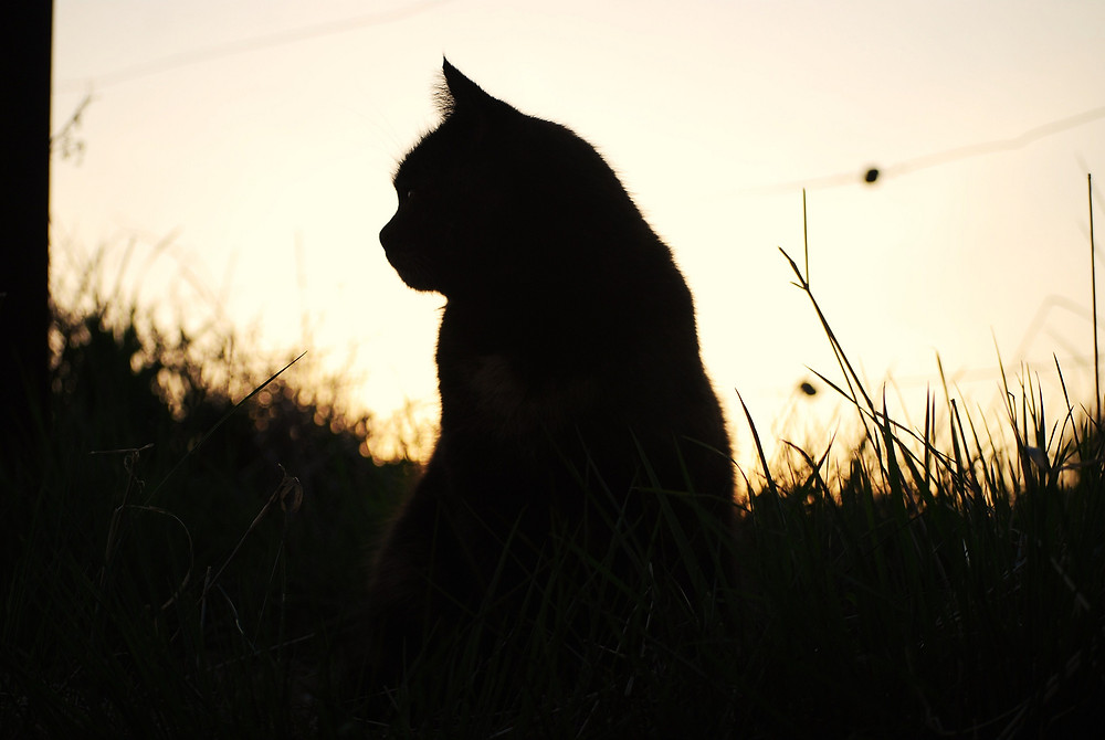the-shadow-of-a-cat-5f79964b-edd5-423e-a98e-2c681c2e50f4