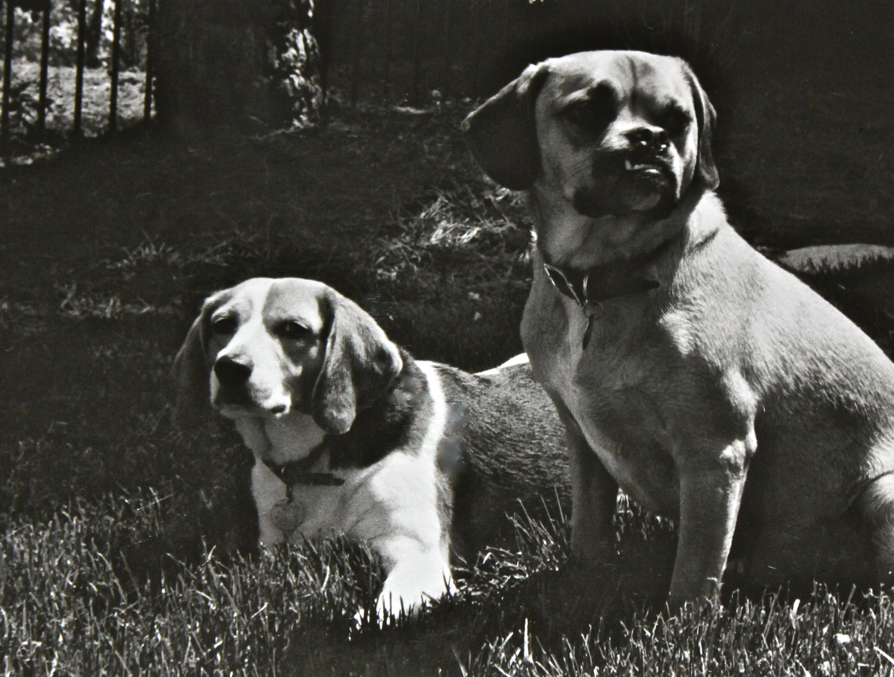 Dotty and Dash- STL, MO