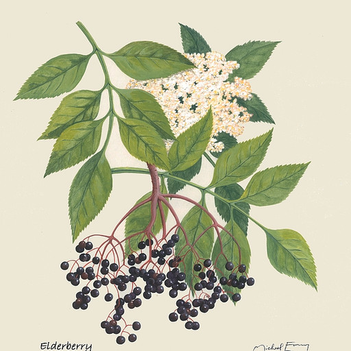 Elder-beauty