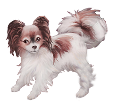 Stella the papillon from Asking for Truffle